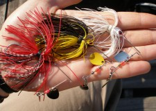 Spinnerbait csalikkal hazai vizeken