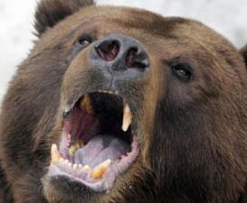 Embert ölt egy medve Hargita megyében