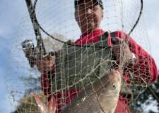 Legyünk óvatosak, miután megszákoltuk a halat! A kövezésen pillanatok alatt megsérülhet a hosszú boló és a száknyél is