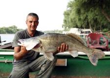 A forró nyári napokon is érdemes süllőre horgászni!