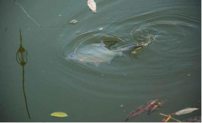Vízügyi közlemény a Tisza-tó téli feltöltési ütemtervéről
