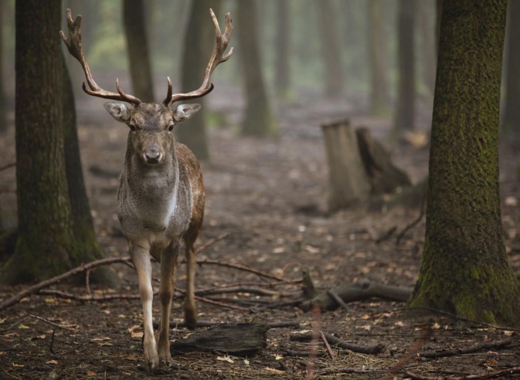 Évi 20 milliárd forint bevételt hoz a vadgazdálkodás