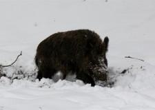 Beköszöntött a tél a gyulaji erdőkben!