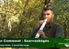 NO COMMENT – Hazai Vadász – Szarvasbőgés – Homolya Károly – A kereső bika hangja
