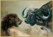 Prihoda Judit kiállítása: Találkozások a vadonban