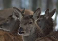 Fontosabb, mint gondolnánk! – A tarvad válogató vadászata