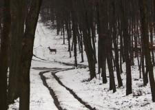 Vadetetés a Szántódi Erdészetnél – 2015.02.15-i adás