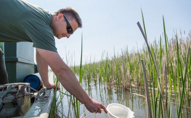Tisza-tó: Csukaivadékot telepítünk!