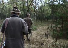 Damhirschjagd im Forstgebiet von KEFAG Zrt. in Süd-Kiskunság in Ungarn