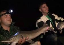 Hőségriasztás? – Sebaj, itt az ideje az éjszakai úszózásnak! – Íme egy örökzöld filmünk az éjszakai matchhorgászatról
