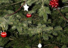 Az ünnep meghittségét viszik a templomokba az ajándék karácsonyfák