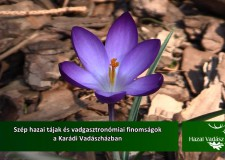 Ajánló – HAZAI VADÁSZ – 2016. 01. 03 – vasárnap 11 óra – ECHO-TV