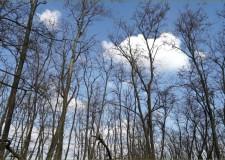 Erdőszerkezeti átalakítás a Pilisi Parkerdő Zrt. Bajnai Erdészetében