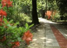 Jeli Varázskert – Elkészült a Jeli Arborétum akadálymentesített tanösvényének második üteme