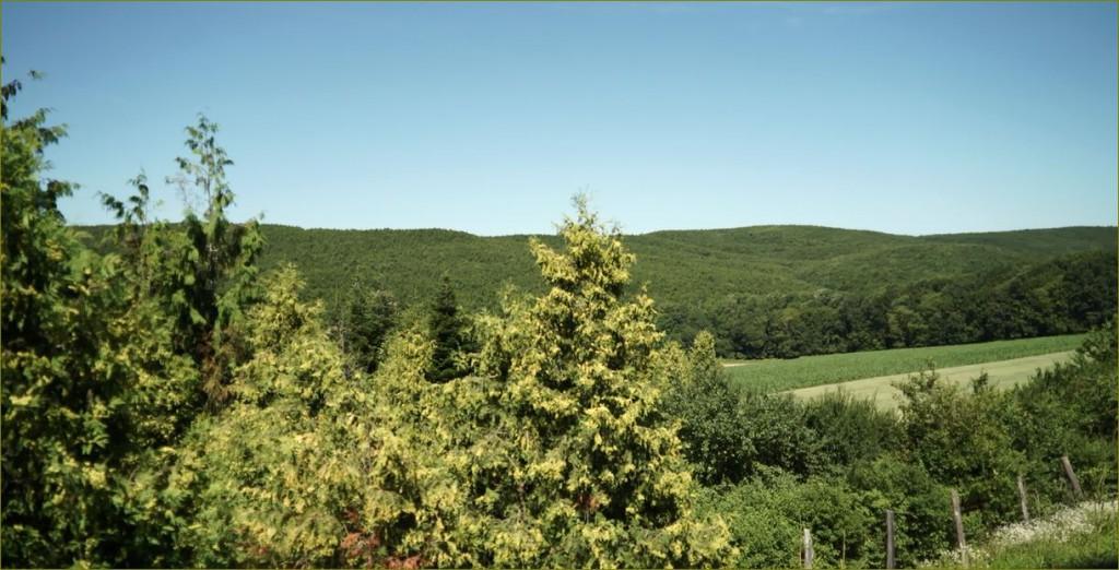 Erdők Hete országszerte 150 helyszínen