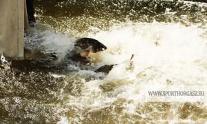 Tisza-tó: Ismét érkeznek a háromnyarasok!