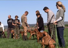 Vorstehhund-Kurs und VAV-Bewerbertraining in Nádasdladány – 16. 04. 2016