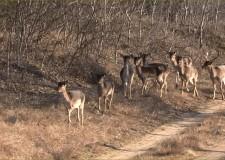 Pirschjagd im Forstgebiet von KEFAG Zrt.in Süd-Kiskunság in Ungarn
