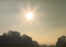 Am Ende der Brunftzeit im Birkenwald -15.10. 2014