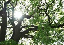 Egyeztetést tartottak az Erdészeti Szakmai Rendszerről – 2016.10.05