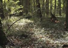 Az erdőterületek növelése, jóléti funkciójának bővítése a Nemzeti Erdőstratégia célja