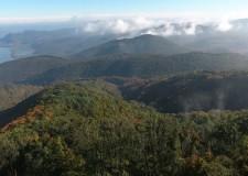 Átlátható és hatékony az állami erdőgazdaságok működése – 2016.11.02