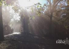 Hazai Erdész – 2016.12.04-i adás – vasárnap 11:00 óra – ECHO-TV