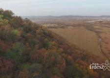 Tovább gyarapodott az erdővagyon 2015-ben