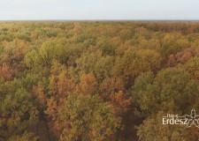 Élénkülő erdőgazdálkodási és öntözési technológiai együttműködés Izraellel