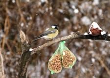 Lakossági felhívás – a várható kemény fagyokban itatással is segíthetjük az etetők madarait!