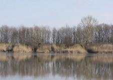 Tisza-tó – Lassan eltűnik a jég – 2017.02.24