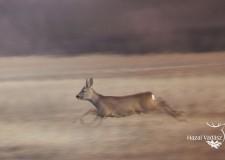 Ökológiai vadgazdálkodás a Pilisi Parkerdőben