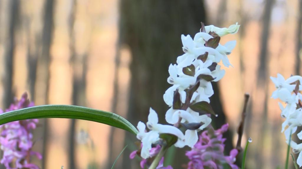 A Pilisi Parkerdő 50 darab madárodút helyezett ki a Gödöllői  Erdészeti Arborétumban – 2017.04.12