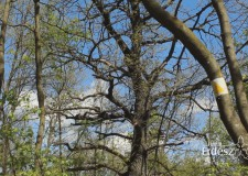Az erdészek szakmai szervezetei üdvözlik az új Erdőtörvény tervezetét – 2017.04.04