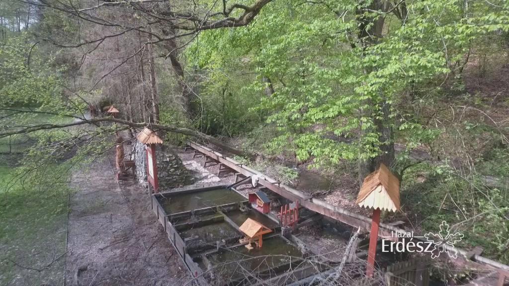 A károsodott erdők mielőbbi helyreállítása a cél – 2017.05.12