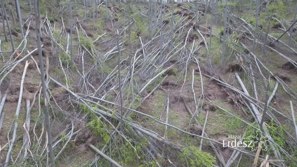 Nagy károkat okozott a szokatlan tavaszi időjárás az erdőkben – 2017.05.11
