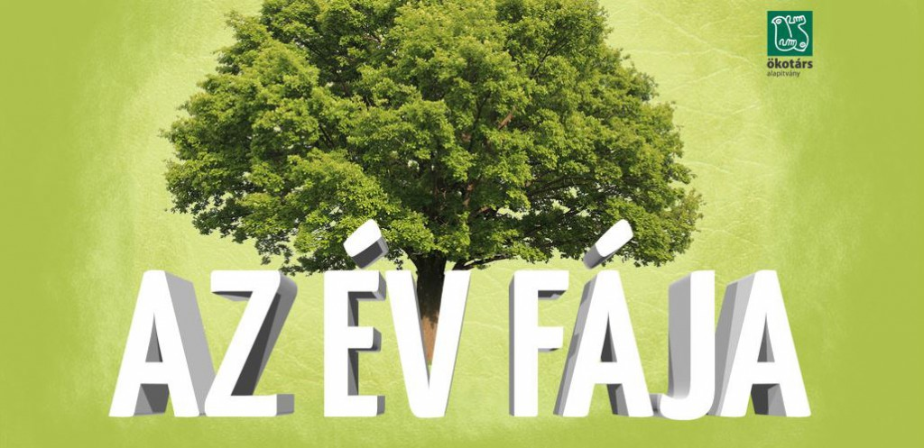 Van kedvenc fád? Jelöld az Év Fája versenybe! – 2017.05.10