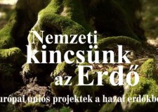 Nemzeti kincsünk az erdő – filmsorozat az M5-ön