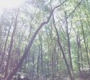 Erdei séta Kékestetőn és Gyöngyössolymoson_Muzsikál az erdő Mátrai Művészeti Napok