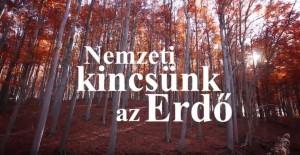 Nemzeti kincsünk az erdő
