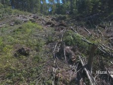 Madárszemmel_Környezetkímélő kötélpálya fakitermeléshez_2017 augusztus