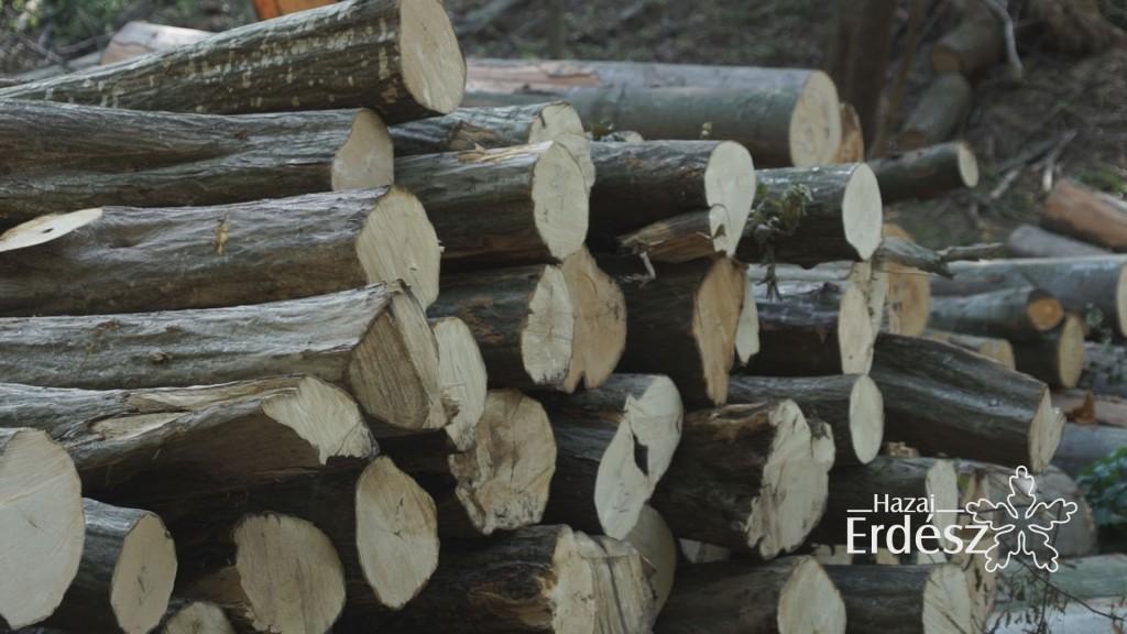 A SEFAG Erdészeti és Faipari Zrt. továbbra is nyitott a magánerdő-gazdálkodók irányába