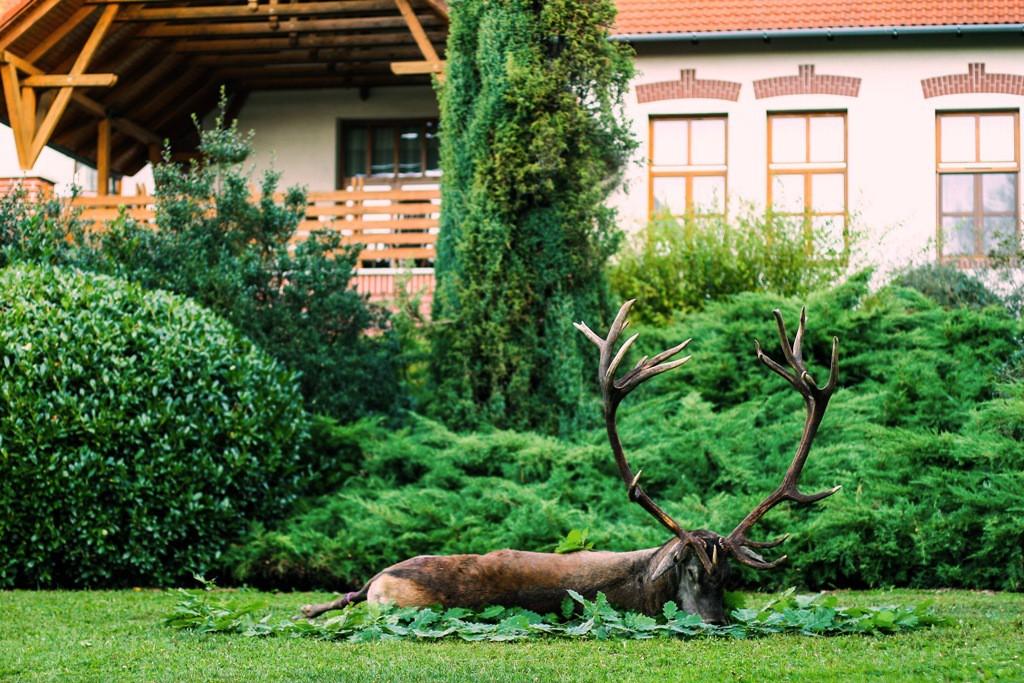 Egy, már negyedik éve számon tartott gímbika terítékre hozásával kezdődött meg a vadászati főidény a SEFAG Zrt. Nyugat-Zselici Vadászterületén_2017.09.07