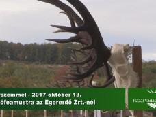 Madárszemmel – Gím trófeaszemle az Egererdő Zrt.-nél – 2017.10.13.