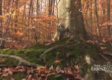 Az erdőgazdaságok több mint 16 milliárdot költöttek az erdei turizmus fejlesztésére – 2017.11.06