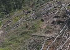 Az erdészek helytállása a rendkívüli időjárásban, a ZÖLD VILÁG Magazinban! – 2017.11.10 – péntek 18:30 óra – ECHO-TV