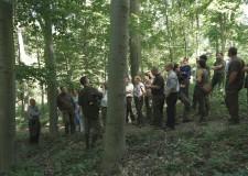 Dauerwaldwirtschaft – die Zusammenarbeit von ThüringenForst und der Pilis Parkforst AG