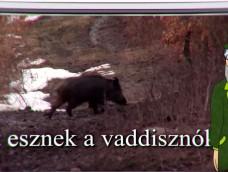 Erdő Ernő Bácsi meséi – Mit esznek a vaddisznók? – 198.adás – 2018.01.20.