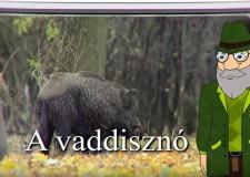 200. adás – Erdő Ernő Bácsi meséi – Milyen állat a vaddisznó? – 2018.02.03-i adás