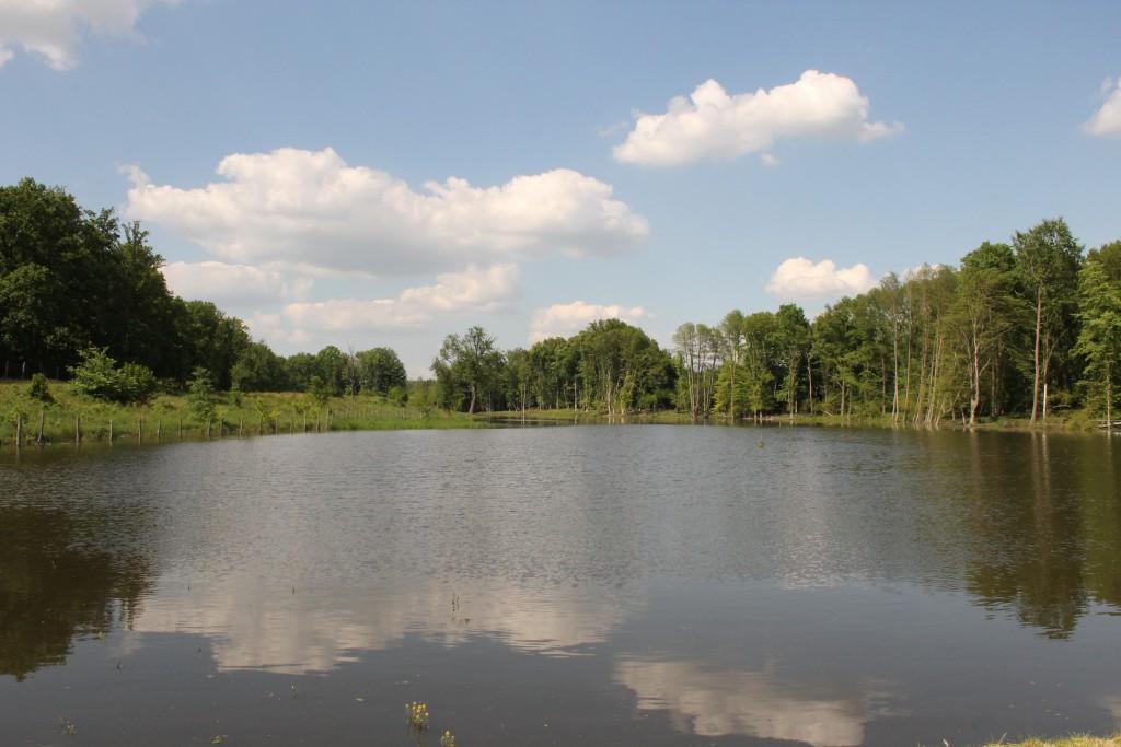Az új Kűvölgyi 4. számú tó